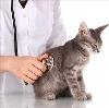 Ветеринарные клиники в Тоцком